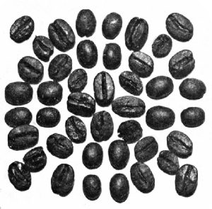 Rio Beans—Roasted