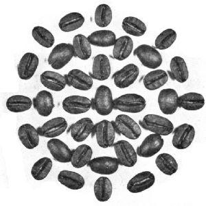 Washed Java Beans—Roasted