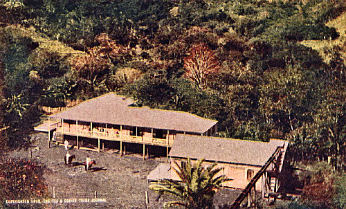 Coffee Estate in the Luquillo Mountains, Porto Rico
