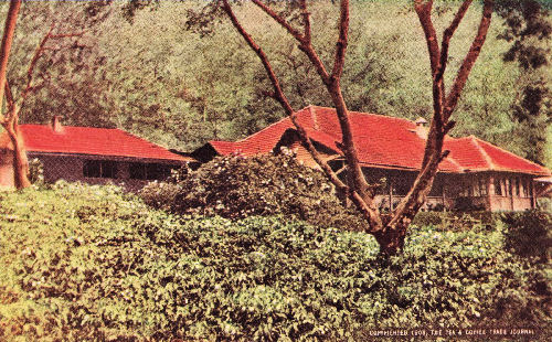 Planter's Bungalow with Coffee Trees in Flower, Mysore