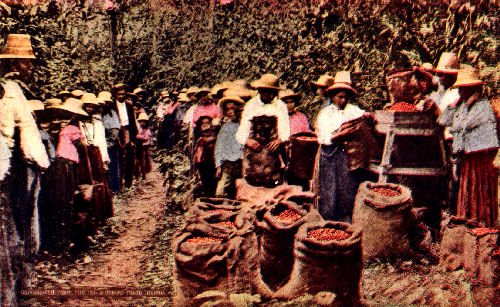 Laborers Bringing in the Day's Pickings, Near Bogota, Colombia